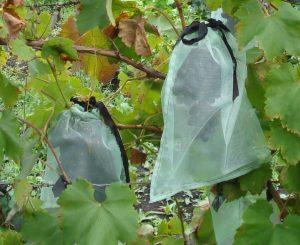 мешки из москитной сетки для винограда